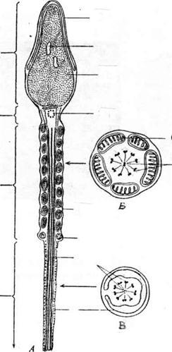 Схема ультрамикроскопического