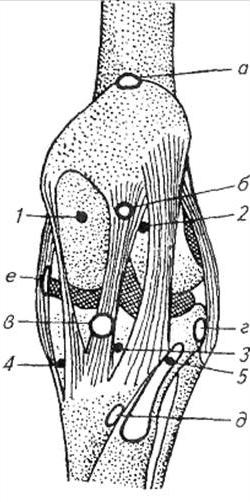 Препарирование логтевого сустава дисплазия тазобедренного сустава у новорожденных 2a
